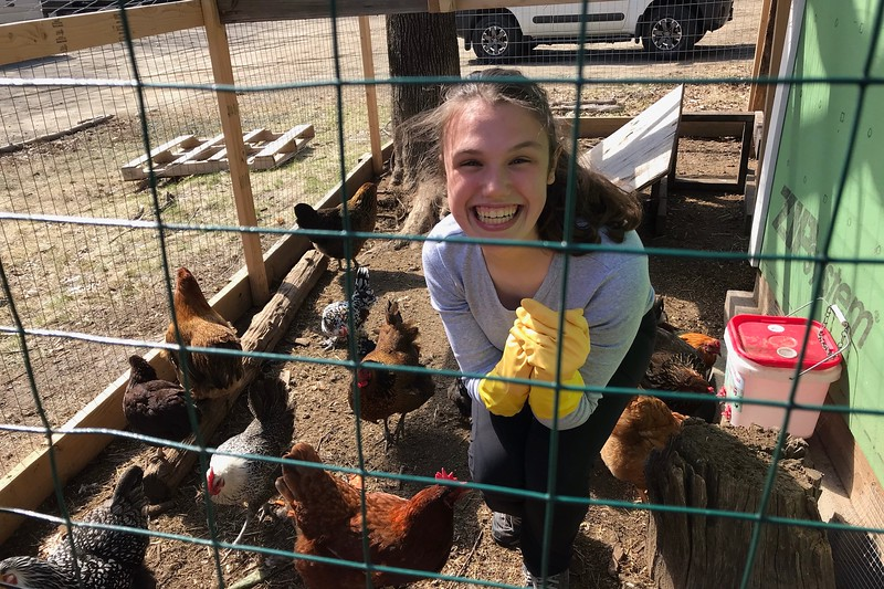 Sophomore Lara Benciscs feeds the chickens at the farm at Land Sake in Weston, MA. Since November, Benciscs has been going every Saturday as an volunteer.