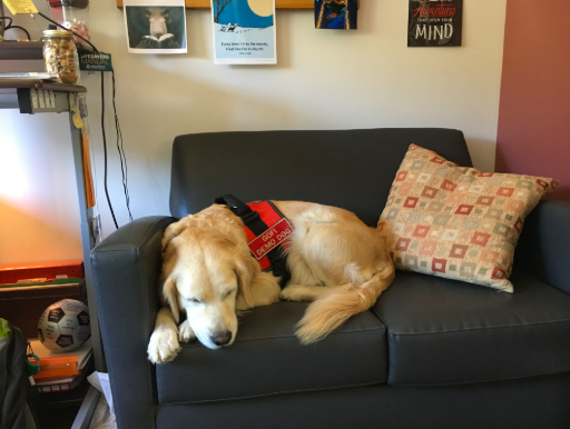 Pictured above is Bridget, a temporary therapy dog for the WHS guidance office. Although training a therapy dog can take up to two years, guidance counselor Marybeth Sacramone hopes to secure a new one within this school year.