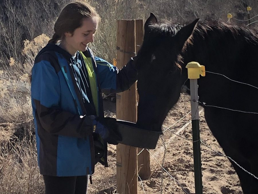 Sophomore+Silvija+Grava+feeds+Jay+the+horse+in+Kanab%2C+Utah.+%22%5BI%5D+got+to+experience+a+lot+of+new+animals+because+I+previously+had+only+worked+with+dogs%2C%22+Grava+said.+