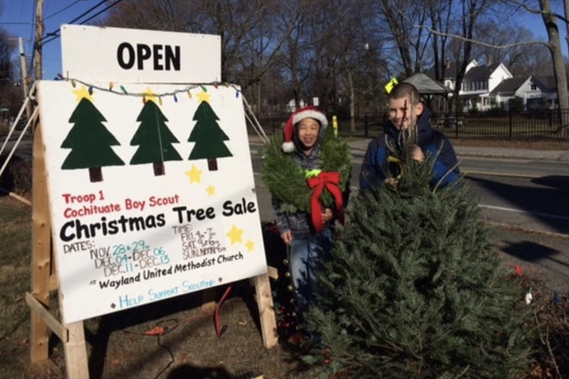 """The Boy Scouts of Wayland will begin its annual Christmas tree sales this Saturday, Nov. 28 and will continue through Dec. 13. """"The most important goal is to give an experience to the Scouts,"""" senior Zach Marto said. """"Part of the idea of the troop is to have a work ethic and carry responsibility."""""""