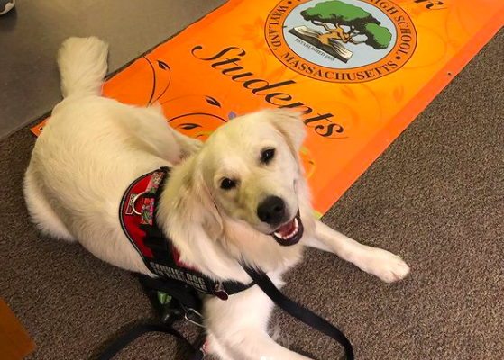 "Meet Ricki, the WHS therapy dog. If you want to meet her, pay a visit to the guidance department and be greeted by a friendly face and a wagging tail. ""A service dog or therapy dog can allow a student to focus on something else for a while, rather than on the difficulty they are going through,"" Sacramone said."