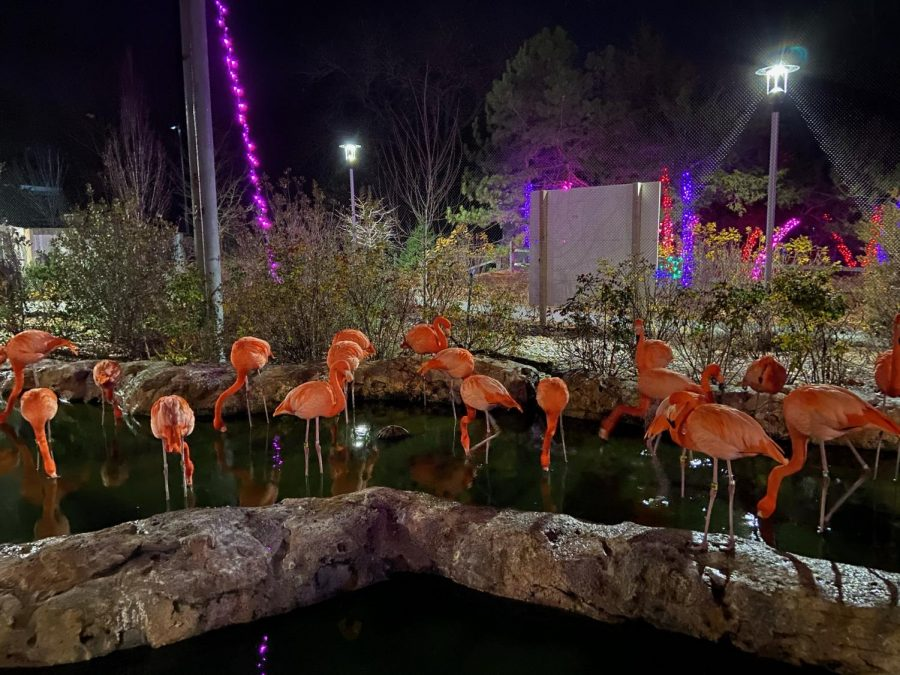 At the Stone Wall Zoo, they have set up a path to walk through the exhibits. Throughout the walk, there are light displays which makes it a perfect holiday activity that makes for an enjoyable outdoor experience.